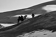 In the Gobi Desert of Mongolia, a camel herder leads his Bactrian camels (Camelus bactrianus) over the snow covered dunes during winter, black and white, Gobi Desert, Mongolia