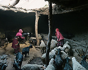 The herd returns after a day out grazing in the mountain. Mother and daughter sort out through goats and sheep (for milking) in the pen next to their home. <br /> The traditional life of the Wakhi people, in the Wakhan corridor, amongst the Pamir mountains.