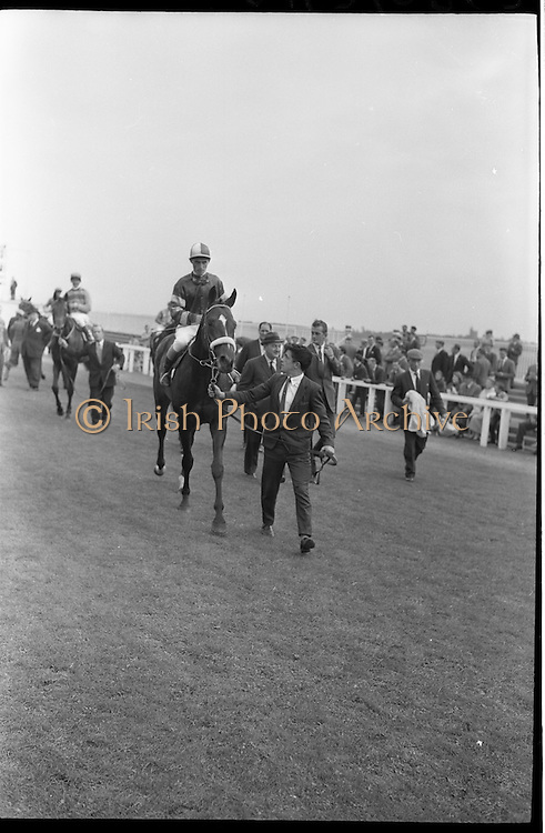 """19/09/1962<br /> 09/19/1962<br /> 19 September 1962<br /> Irish St. Leger at the Curragh Race Course, Co. Kildare. Image shows """"Arctic Vale"""" ridden by Peadar Matthews, winner of the race being led in."""