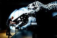 En håndværker monterer det sidste skilt inden åbningen af udstillingen, hvor kan hilse på Tristan Otto.<br /> 66 millioner år gammel, 4 meter høj, 12 meter lang og med næsten alle sine frygtindgydende tænder intakt: Tristan Otto, dinosaurernes konge, er landet i København og giver dig mulighed for at komme helt tæt på et af verdens mest komplette Tyrannosaurus rex-skeletter. Tristan Otto er centrum for en Statens Naturhistoriske Museum mest unikke udstillinger til dato og vises side om side med andre unikke dinosaurfossiler fra fredag d. 19. juni 2020.