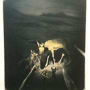 """""""Family""""  11""""x14"""" gelatin silver print, toned with cactus tea. Photo shot by the """"Deer"""" camera. <br /> # 5 of 8."""