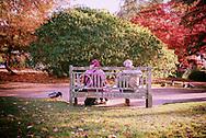 Elderly couple sitting on a bench feeding the ducks.
