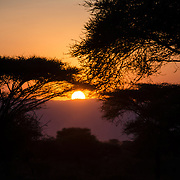 As the sun sets below the horizon, the last golden rays silhouette acacia trees at Tarangire National Park in northern Tanzania not far from Ngorongoro Crater and the Serengeti.