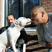 """Nederland Rotterdam 19 september 2008 20080919 Foto: David Rozing ..Achterstandswijk Bloemhof Rotterdam Zuid. Man geeft zijn engelse stefford een zoen..Staffordshire Terriërs (zowel de Amerikaanse als de Engelse) dienen in Nederland in het bezit te zijn van een FCI-stamboom. Pups welke voortkomen uit kruisingen van bijvoorbeeld een Staffordshire Terriër met een Rottweiler, en die op de leeftijd van 6 maanden al in overwegende mate op een Staffordshire Terriër lijken, vallen automatisch onder de RAD (in de volksmond """" Pitbulwet """"). Kruisingen kunnen namelijk nooit een FCI stamboom krijgen. Kruis daarom nooit een Staffordshire Terriër met een ander ras. American Staffordshire Terriër reuen en teven mogen niet eerder fokken dan wanneer ze de MAG - test ( Maatschappelijk Aanvaardbaar Gedrag ) met succes hebben volbracht...Foto David Rozing"""