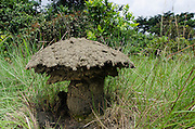Umbrella termite mounds<br /> Odzala - Kokoua National Park<br /> Republic of Congo (Congo - Brazzaville)<br /> AFRICA