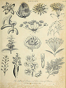 Division of flowers  Copperplate engraving From the Encyclopaedia Londinensis or, Universal dictionary of arts, sciences, and literature; Volume III;  Edited by Wilkes, John. Published in London in 1810