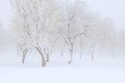 Winter Trees Draped in Frozen Fog, Wallowa Mountains, Oregon