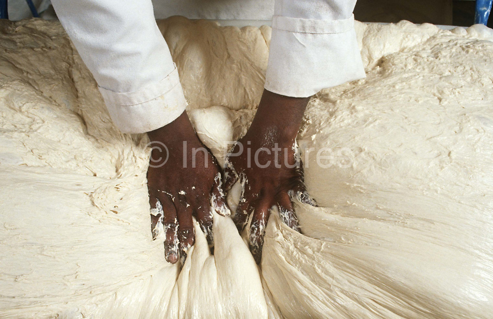 """A baker presses his hands deep into a mixture of dough, to become Italian Ciabatta bread. As his fingers sink into the mixture, we get a sense of how thick and sticky the blend of flour and water plus secret ingredients have become. Pressing down into the dough, the man's skin is of African or afro-Caribbean origin, clearly made out in the white of the mix, his white baker's uniform's sleeves also spattered with flour. Ciabatta (literally """"carpet slipper"""") is an Italian white bread made with wheat flour and yeast. The loaf is somewhat elongated, broad and flattish. Its name is the Italian word for slipper. There are many variations of ciabatta. Ciabatta in its modern form was developed in 1982. Since the late 1990s it has been popular across Europe and in the United States, and is widely used as sandwich bread."""