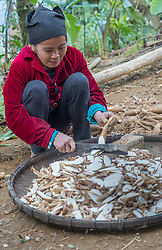 Asia, Vietnam, Pu Luong Nature Reserve. Woman chopping cassava.