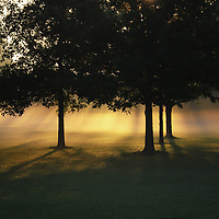 """""""Foggy Rays of Morning""""<br /> <br /> Wonderful trees in silhouette with golden sunshine through low lying fog!!"""