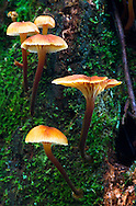 Mushrooms growing on a tree trunk at Campbell Valley Park in Langley, British Columbia, Canada