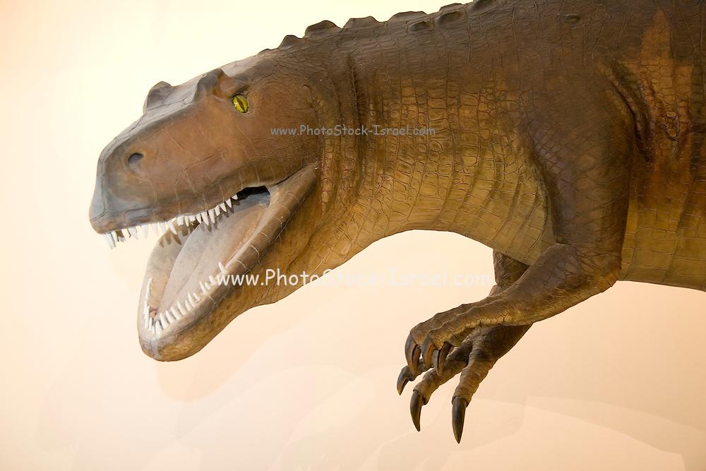 Lincoln Nebraska NE USA Nebraska museum of natural history at the Nebraska University A display of a Common Carnosaur