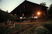 Harvesting for the farmers market begins before dawn.