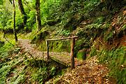 Forrest in Rwanda. Photoart. Paint effect added   Skog i Rwanda. Fotokunst. Malerisk effekt lagt til.