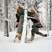 Sami men chopping a tree for firewood in a forest in Lapland, Sweden