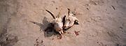 Heads of freshly slaughtered goats. Wudaolinzi village near Tongxin, Ningxia province China