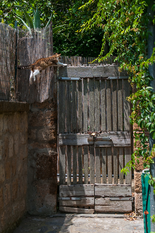 """A cat jumps in an entrance of a house of the village of Civita di Bagnoregio.<br /> Civita di Bagnoregio is a town in the Province of Viterbo in central Italy, a suburb of the comune of Bagnoregio, 1 kilometre (0.6 mi) east from it. It is about 120 kilometres (75 mi) north of Rome. Civita was founded by Etruscans more than 2,500 years ago. Bagnoregio continues as a small but prosperous town, while Civita became known in Italian as La città che muore (""""The Dying Town""""). Civita has only recently been experiencing a tourist revival. The population today varies from about 7 people in winter to more than 100 in summer.The town was placed on the World Monuments Fund's 2006 Watch List of the 100 Most Endangered Sites, because of threats it faces from erosion and unregulated tourism."""