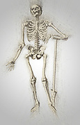 "Digitally enhanced image of a Male full body front skeleton woodcut print at the opening of the Human Anatomy book ""Notomie di Titiano"" Printed in Italy in 1670"