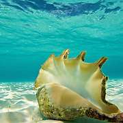Beautiful shell in white sand
