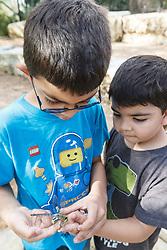 Children examining green darner dragonfly on  a hand,  Mitchell Lake Audubon Center, San Antonio, Texas, USA.