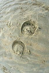 Strandrijden 2007<br /> © Hippo Foto