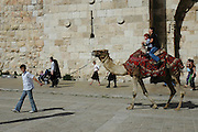 Tourists riding on a camel outside the walls of the old city of Jerusalem, Israel