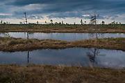 Cloudy morning with occasional short showers in raised bog with lots of bog pools, Kemeri National Park (Ķemeru Nacionālais parks), Latvia Ⓒ Davis Ulands | davisulands.com
