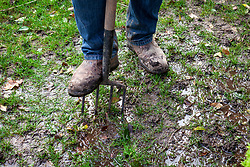 Aerating a waterlogged lawn by making holes with a fork.