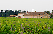 Unknown chateau, seen from where you also see Cheval Blanc and close to l'Evangile. Saint Emilion  Bordeaux Gironde Aquitaine France