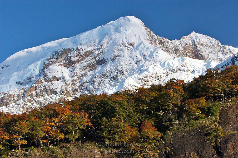 Autumn leaves and clear blue skies lend color to the mountain scenery in Los Glaciares National Park, Argentina.
