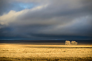 2 bare trees on plains lit by sunset light, stormy background, Karval CO