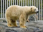 Alaska: Anchorage: Alaska Zoo