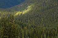 a streak of light from a break in the clouds lights a portion of the coniferous forest Rainier Fork drainage of the American River in the William O Douglas Wilderness, Wenatchee National Forest, Cascade Mountain Range, Washington state, USA