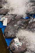 Monchong, United Fish Auction, Honolulu, Oahu, Hawaii