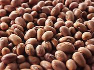 Fresh un-cooked Borlotti beans - stock photos