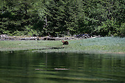 Brown Bear, Alaska<br />