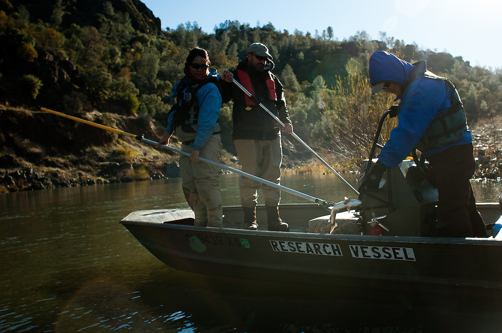 A group of biologists with the Yuba River Management Team count salmon carcasses to determine population size.