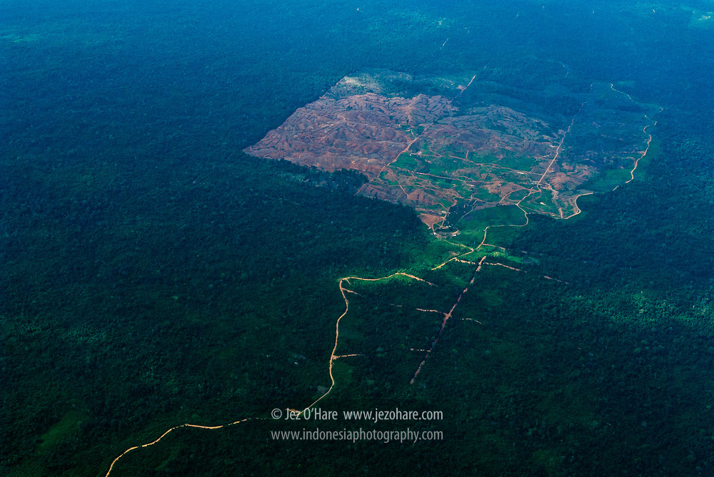 Clear cutting rain forest for an oil palm plantation, East Kalimantan, Indonesia