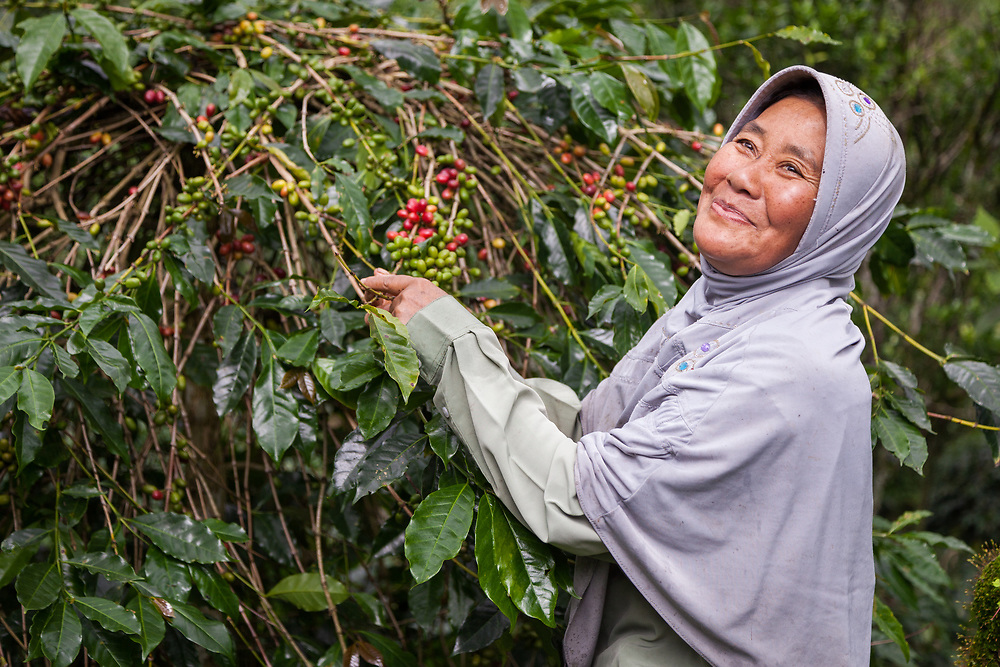 Ibu Kamariah (53) picks coffee cherries at her farm associated with KBQB.  She has been a member for 8 years.  The biggest challenge for her is price stability and obtaining seeds.  As a member of KBQB she receives support such as farm tools and the co-op has helped built a place of worship.  As a farmer she is able to support her family and she has been a farmer her entire life.