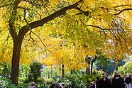 Union Square Fall Foliage, storefronts, signage