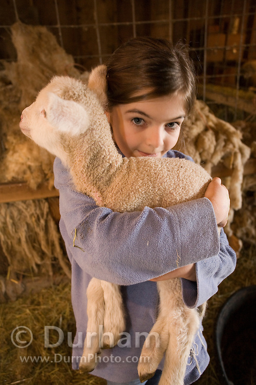 10 year old Hannah Lyons holds a three day old lamb in a barn on a Sauvie Island farm. Oregon. model/property released.