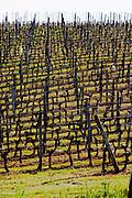 vineyard chateau pey la tour bordeaux france