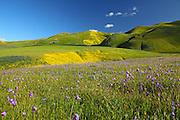 Velvet Green Grass Rolling Hills of Central California