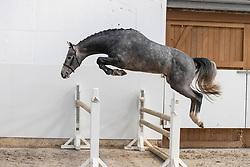 Simply de Regor<br /> Stal de Muze - Sint Niklaas 2021<br /> © Hippo Foto - Dirk Caremans<br /> 20/03/2021