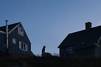 Sled dog outside houses in evening twilight, Tasiilaq, Greenland