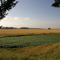 Amuq Plain