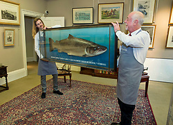 Porters from the auction house prepare a copy of the British record breaking salmon, caught on the River Tay in 1922, which is expected to fetch in excess of £6,000 when it goes under the hammer at Bonhams sporting auction in Edinburgh this week.<br /> <br /> © Dave Johnston/ EEm