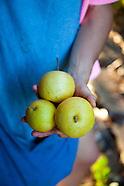 Portland Fruit Tree Project