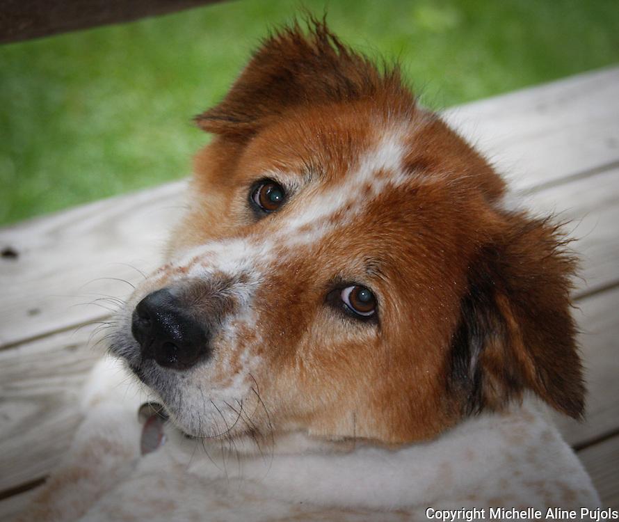 Head shot of dog