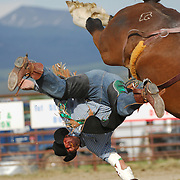 A cowboy getting bucked off of a horse at the Wilsall Rodeo in Montana.
